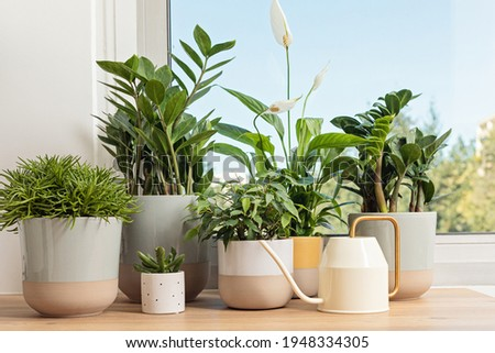 Collection of various home plants. Home gardening, greenery, interior design with plants, hobby concept Royalty-Free Stock Photo #1948334305