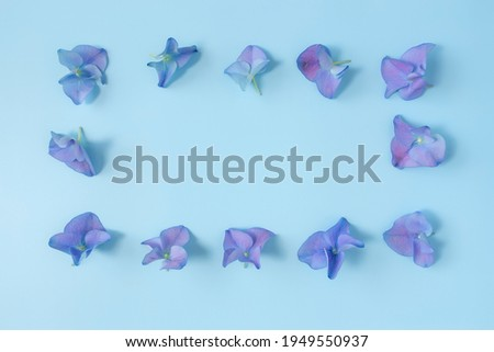 Flat lay with hydrangea or hortensia blue-purple petals on pastel blue background. Picture frame from flowers. High quality photo