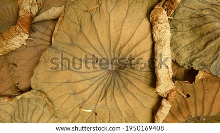 Close-up picture of the wall composed of dried lotus leaves