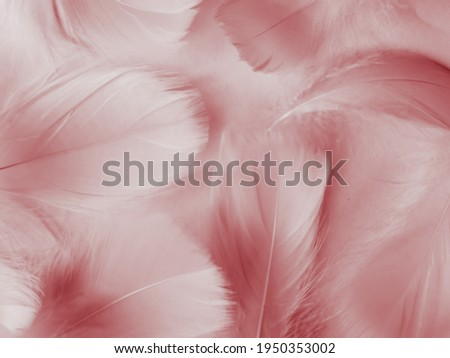 Beautiful abstract red feathers on white background, white feather texture on red pattern and red background, pink feather wallpaper, love theme, wedding valentines day, red gradient Royalty-Free Stock Photo #1950353002