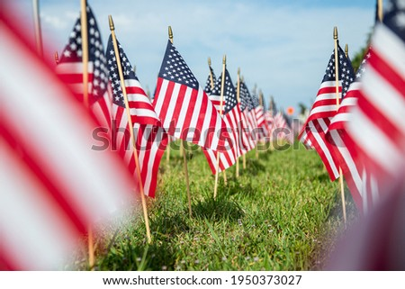 Hundreds of American flags planted on the lawn Royalty-Free Stock Photo #1950373027