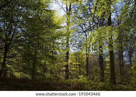 light among the trees #195043466