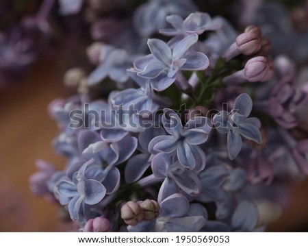 Lilac flowers (bouquet, jar) macro