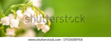 Lily of the valley flower close up, green nature panoramic background. May 1st, May Day web banner Royalty-Free Stock Photo #1950688966