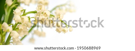 Lily of the valley flower blossom, white panoramic background. May 1st, May Day web banner Royalty-Free Stock Photo #1950688969