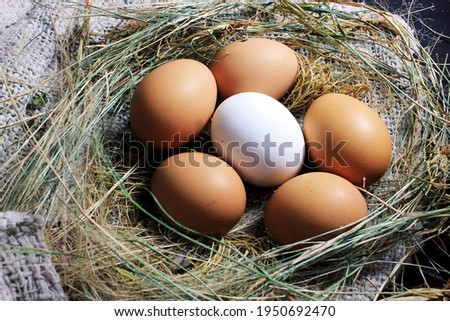 The Eggs closeup picture on the burlap cloth stock photo , white egg in the middle of brown eggs
