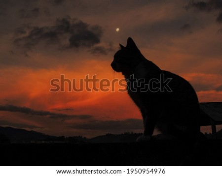 Beautiful photograph of a cat silhouette at sunset. Stunning large image of a cat silhouette at sundown. Wonderful nightfall landscape composed by a black cat, dark clouds, orange sky and full moon