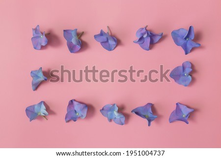 Flat lay with hydrangea or hortensia blue-purple petals on pink background. Picture frame from flowers. High quality photo