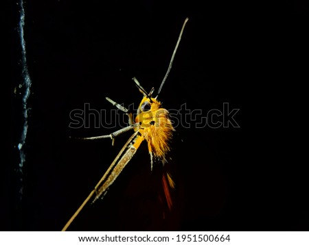 moth picture with dark background