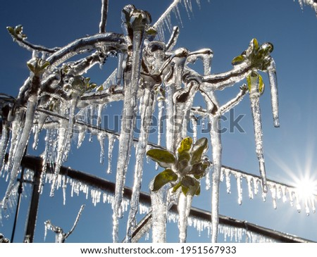 Close up of fruit tree branches with buds and freezers hanging from plant. Modern plant protection from frost by spraying  Royalty-Free Stock Photo #1951567933