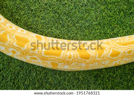 This is a very beautiful picture of an albino snake