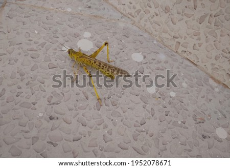 The picture GRASSHOPPER is very looking on the marble.