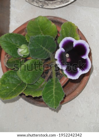 Color of the begonia plant in nature Royalty-Free Stock Photo #1952242342