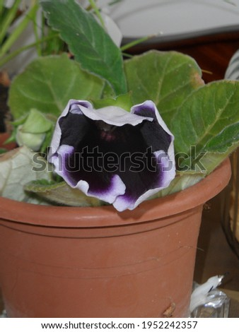 Color of the begonia plant in nature Royalty-Free Stock Photo #1952242357