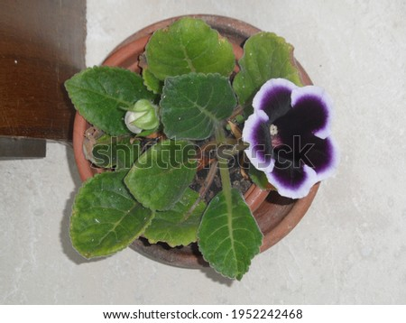 Color of the begonia plant in nature Royalty-Free Stock Photo #1952242468