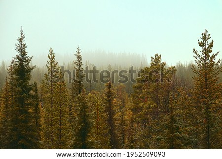 Tree tops. Coniferous northern frost-hardy forest near and in a hazy perspective. View over forests. Misty sun. Siberian spruce (Picea obovata) prevail. Forest science, forestry Royalty-Free Stock Photo #1952509093