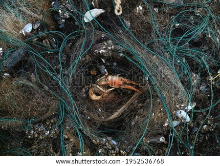 Abandoned poaching nets and dead hydrobionts: crayfish, small mussels, zebra mussel and other mollusks Royalty-Free Stock Photo #1952536768