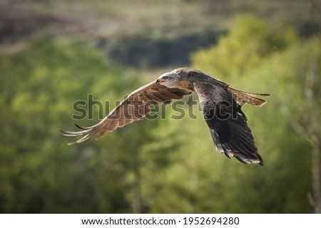 beautiful creatures in cantabria, spain  Royalty-Free Stock Photo #1952694280