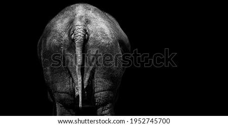 Tail Elephant, Elephant Rear View Royalty-Free Stock Photo #1952745700