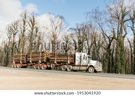 Australian bushfires aftermath: a truck with burned pines logs which was badly damaged by severe bushfires and nedd to cut down. Royalty-Free Stock Photo #1953041920