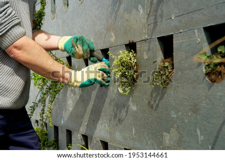 The realization of a vertical facade garden with green plants Royalty-Free Stock Photo #1953144661
