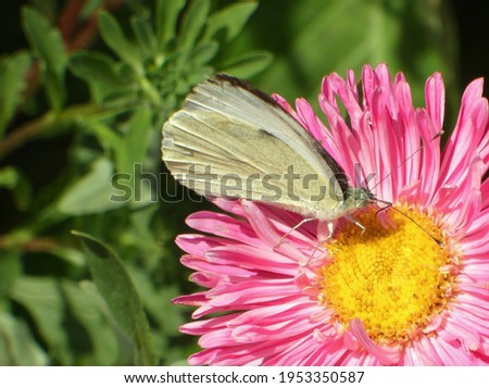 The beauty of the butterfly in the nature Royalty-Free Stock Photo #1953350587