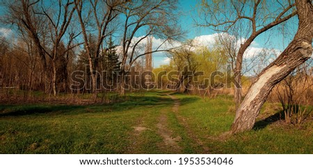 Drone shoot of a road path in the woods at golden hour in cinematic mode. Green grass and empty trees in the woods on a sunny day at sunset in spring. Copy space ecology background.  Royalty-Free Stock Photo #1953534046