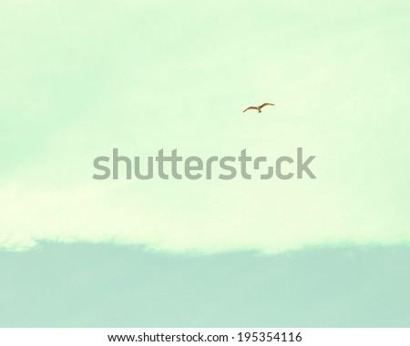 Birds in Retro Sky