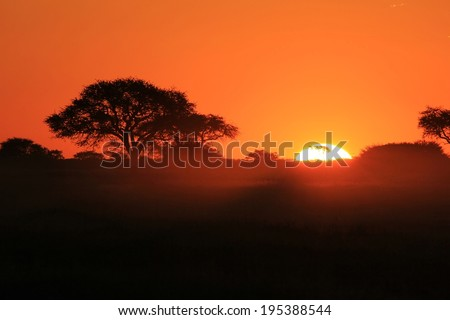 Sunset Background from Africa - Golden Nature and her Beautiful Colors