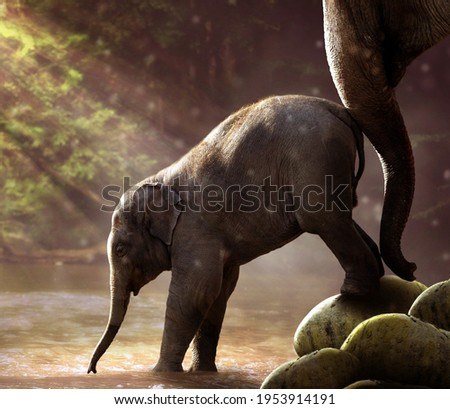 A picture of the little elephant and his mother with him as they go down to the water of the lake in the forest, a very beautiful and expressive view