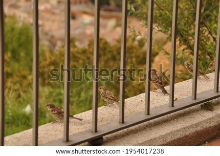 This is a picture of a sparrow on the railing.