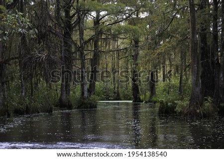 Dark swamp wetlands with grey greens water Royalty-Free Stock Photo #1954138540