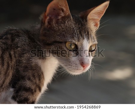 India, 5 April, 2021 : Closeup of cute kitten. Cute cat. Adorable kitten. Cute kitten background. Beautiful animal.