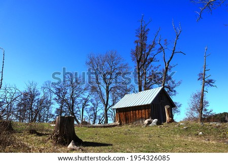 One old wooden cabin at the countryside. Spring time, plenty of trees. A stump or stub in the front of the picture. Swedish April weather a sunny day outside. Järfälla, Stockholm, Sweden, Europe.