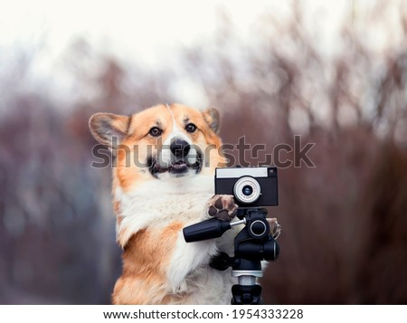 funny corgi dog puppy stands in the garden and take pictures on an old photo camera