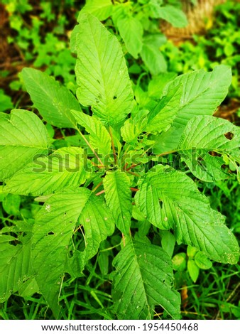 Picture of leaves in forest after heavy raining and Spring weather. It defines the freshness of nature. To glimpse of nature from picture.