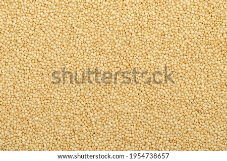 Amaranth grain surface and background. Tiny seeds of Amaranthus, a gluten free pseudocereal similar to quinoa, a staple food and source of protein of the Aztecs. Close-up, from above, food photo.