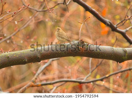 A picture of sparrow sitting on a tree branch on a rainy day.