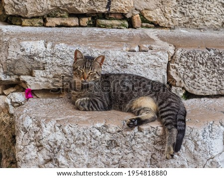 Homeless, colorful cat resting on the stone stairs in Italy. A great greeting card, design for print or picture.