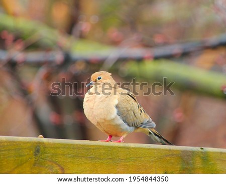 A beautiful picture of a dove bird .
