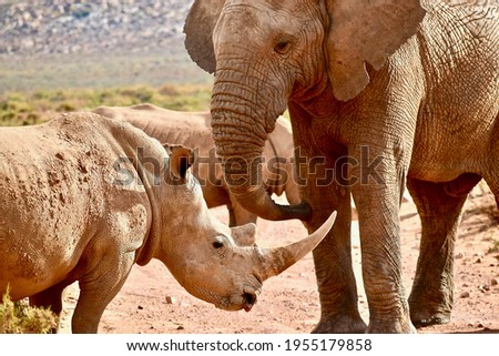 A stunning Picture of a Rhino and Elephant Bonding