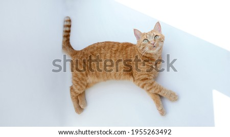Cute ginger cat lying down relaxing or napping on white table with hard sunlight. Feline concept. High quality photo