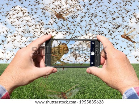 Man hands holds a mobile phone and taking pictures of a swarm of migratory locusts (Locusta migratoria). People use smartphone to take photo