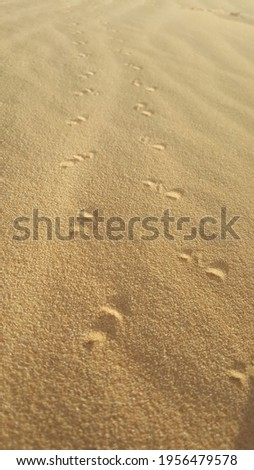 trace of Scorpio  on the sand   in desert north Africa