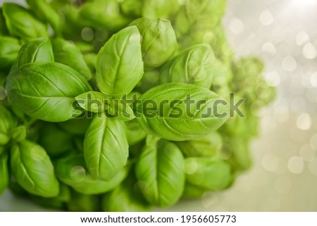 Sweet basil: a species of Mint, also known as Great basil, Saint-Joseph's-wort, Genovese basil, it's botanical name is Ocimum basilicum. Royalty-Free Stock Photo #1956605773