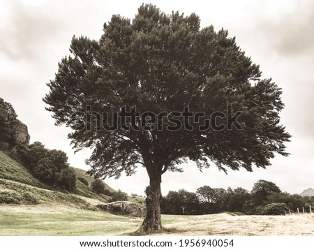 One tree in a field. Vintage colored photo