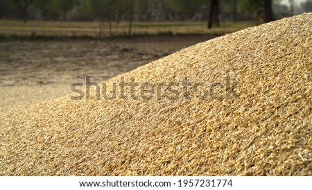 Piles of wheat straw for animals fodder use. Mountain fodder straw use for animal feeding. Royalty-Free Stock Photo #1957231774