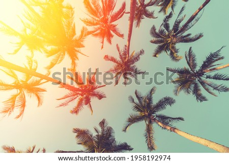 Tropical palm tree with sun light on sunset sky and cloud abstract background. Summer vacation and nature travel adventure concept. Vintage tone filter effect color style. Royalty-Free Stock Photo #1958192974