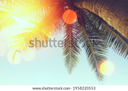 Tropical palm tree with sun light on sunset sky and cloud with colorful bokeh abstract background. Summer vacation and nature travel adventure concept. Vintage tone filter effect color style. Royalty-Free Stock Photo #1958220553