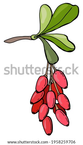 Branch with barberry berries. Hand-drawn style. White background, isolate. Vector illustration. Royalty-Free Stock Photo #1958259706